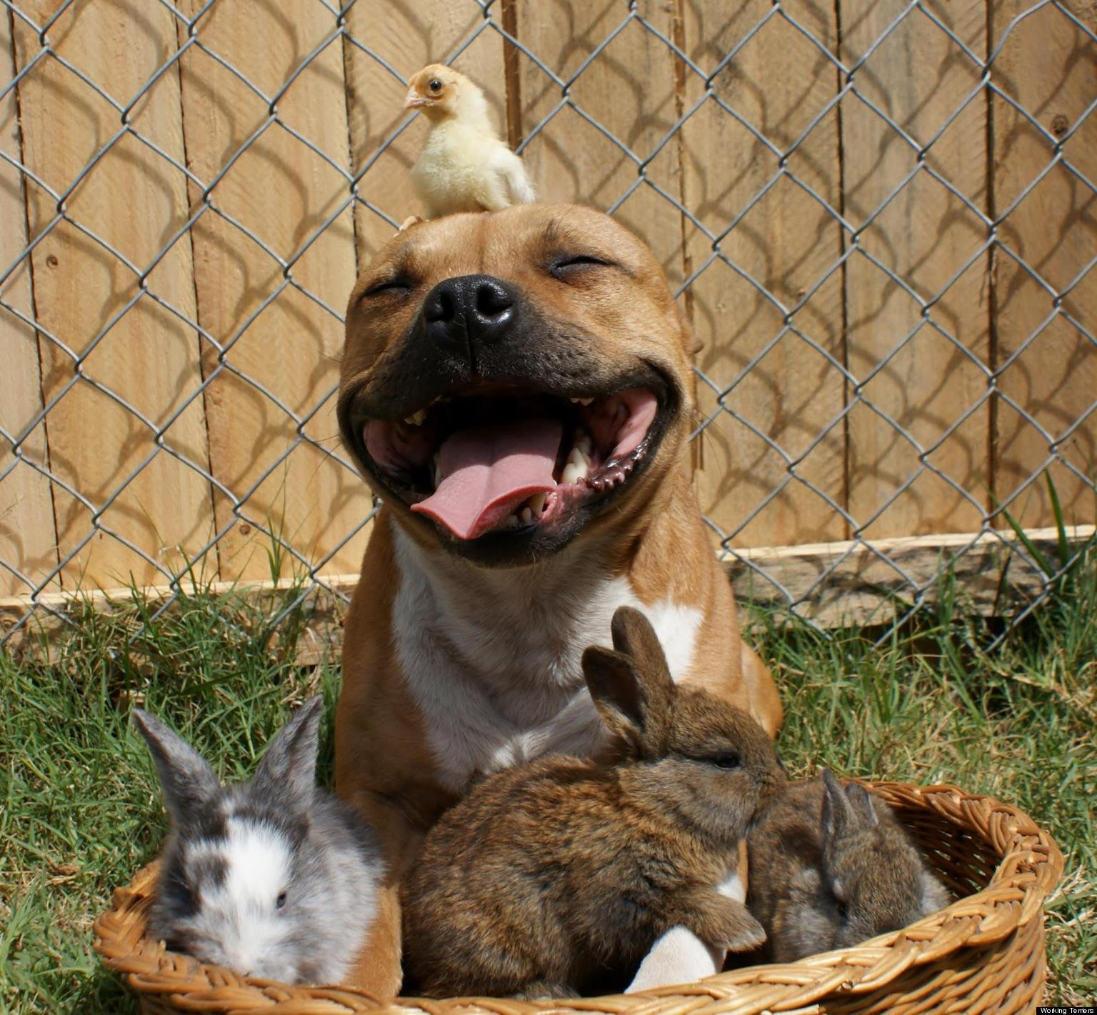 26 OF THE MOST DANGEROUS THINGS PIT BULLS DID IN 2015