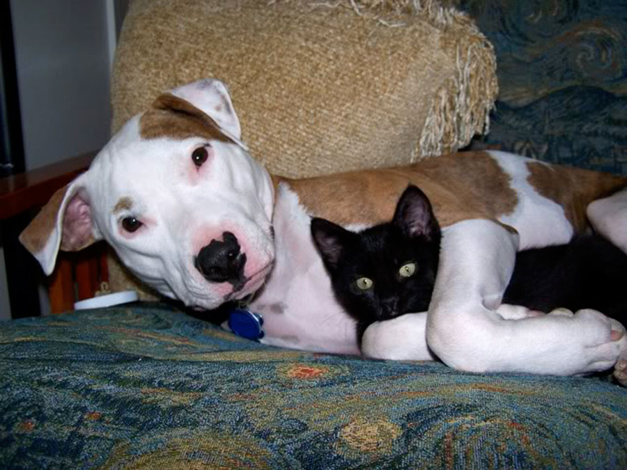 PITTIES AND KITTIES!!